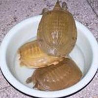 桂平沙黄鳖
